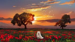 Samoyed Clouds