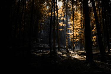 The Journey Pt1: Into the Dark by Sleepwalker1803