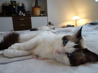 I can has kitteh! by Sleepwalker1803