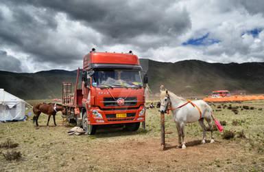 Horse Racing Festival
