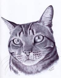 Bolota portrait