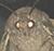Moth Meme Brother