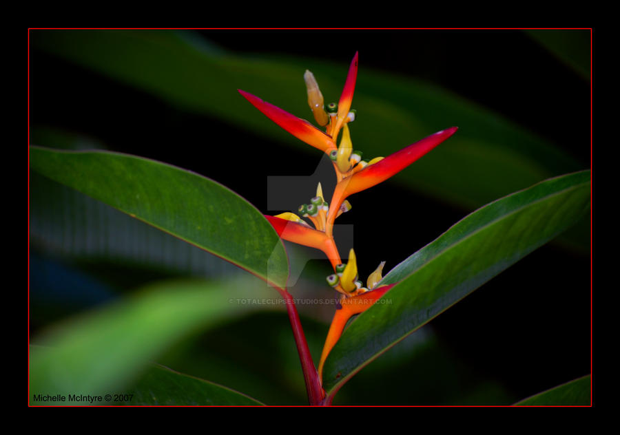 Bird Of Paradise By Totaleclipsestudios