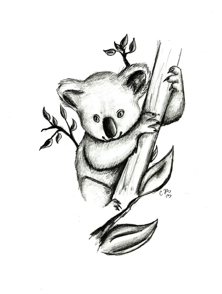 Line Drawing Koala : Baby koala bear drawing