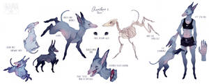 Auribus - 2017 Reference