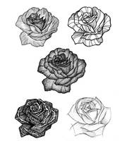 roses by parrotte