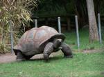 Tortoise1-Stock
