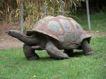 Tortoise3-Stock by SilkenWebs