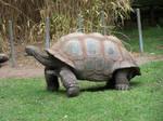 Tortoise4-Stock