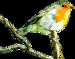 Watercolour Bird2