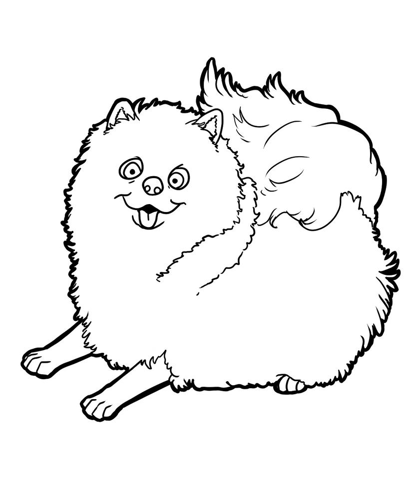 Pomeranian by CandyBeeLinearts on DeviantArt