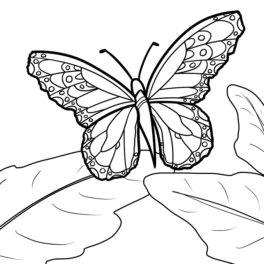 Monarch Butterfly By CandyBeeLinearts On DeviantArt
