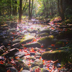 Mountain stream by mid-day-delusions