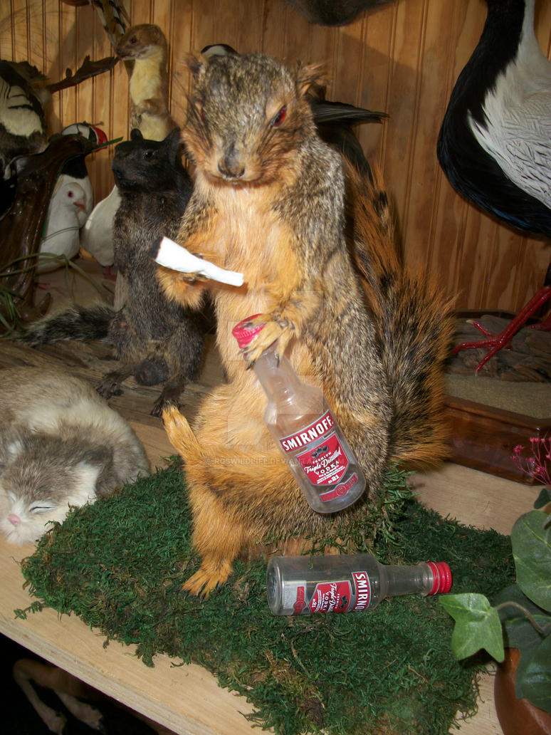 Mátame, camión! (El Tópic de la Taxidermia Chunga) - Página 7 Rogue_drunk_high_squirrel_by_rgswildlife-d5xzyg7