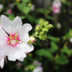 A flower... by Shxd0eBrix