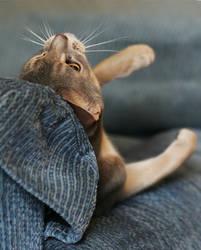 The Alien Cat by TruemarkPhotography