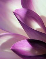 Dahlia Macro 1 by TruemarkPhotography