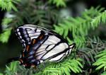 June Butterfly 02