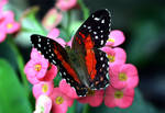 June Butterfly 06