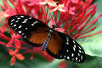 June Butterfly 07
