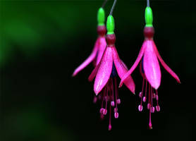 Floral Ballerinas by TruemarkPhotography