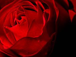 Autumn Rose by TruemarkPhotography