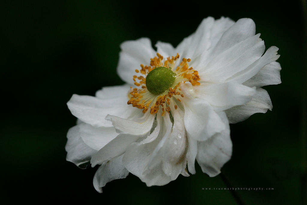 White Magic by TruemarkPhotography