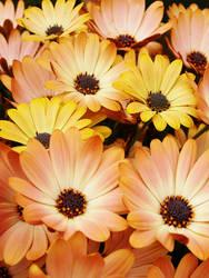 Joyous Color 2 by TruemarkPhotography
