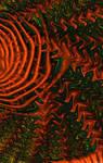 Schlock Waves by 2BORN02B