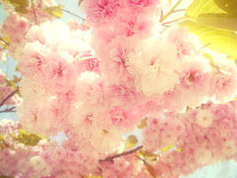 Cherry Blossom Girl by mairimart