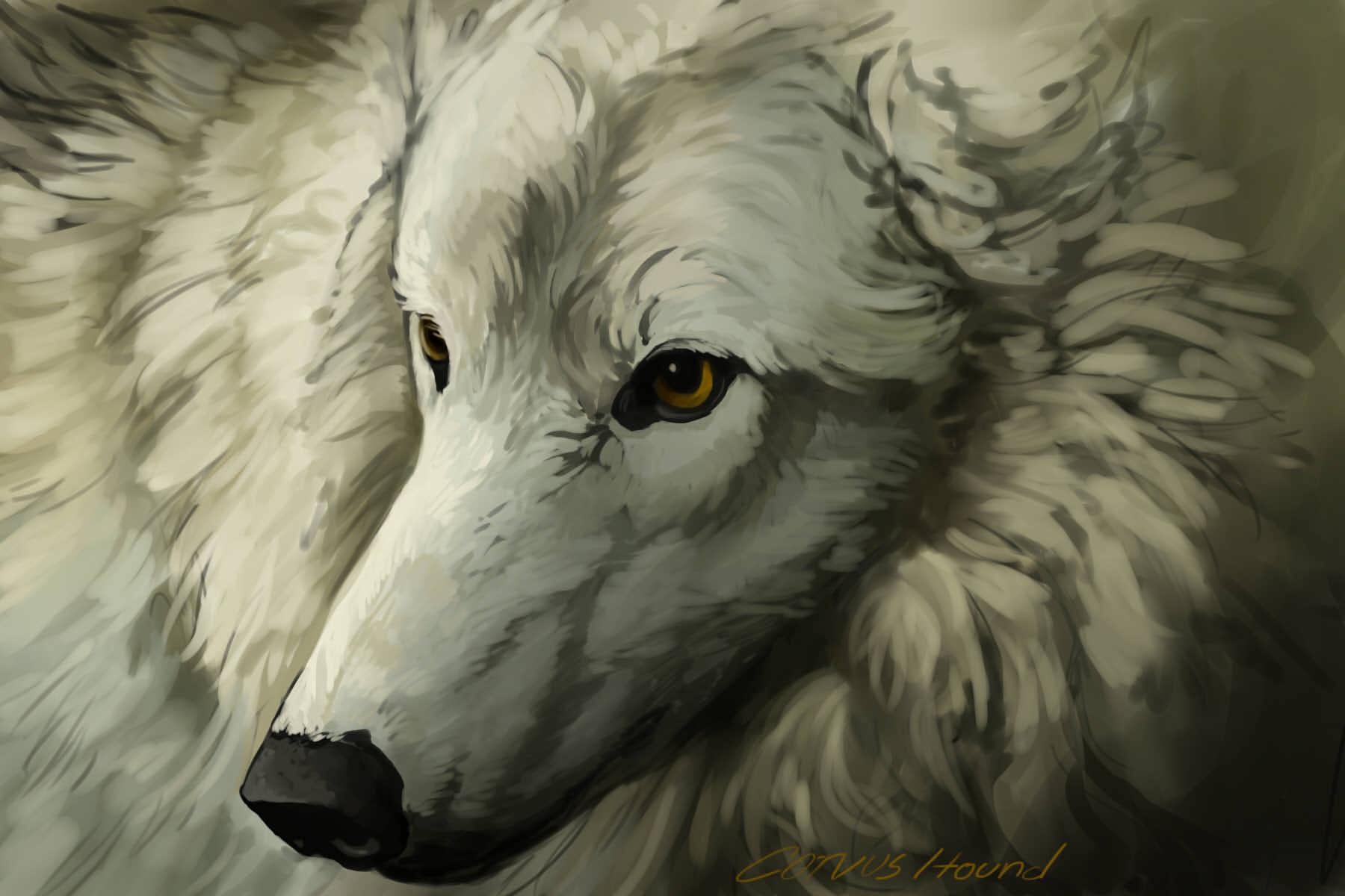 White Wolf Study by CorvusHound