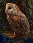 Barn Owl by CorvusHound