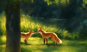 August Foxes
