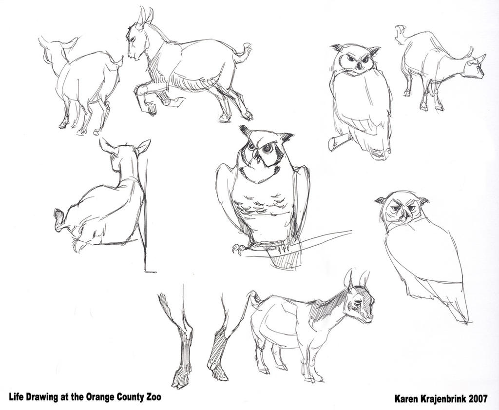 how to draw zoo animals free