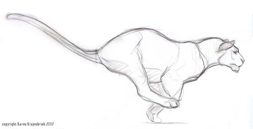 Tiger Run Study