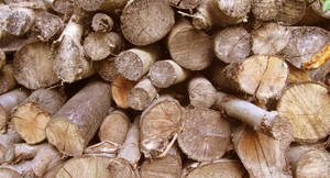 drying logs