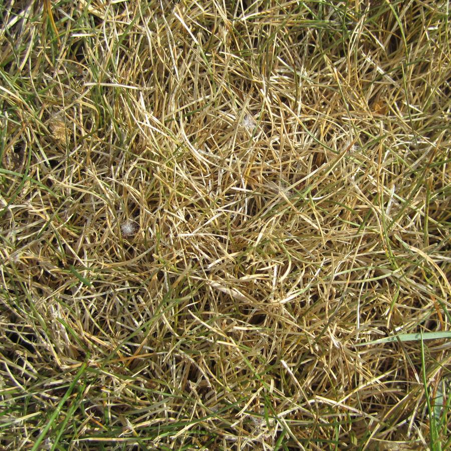 grass by warpig-stock