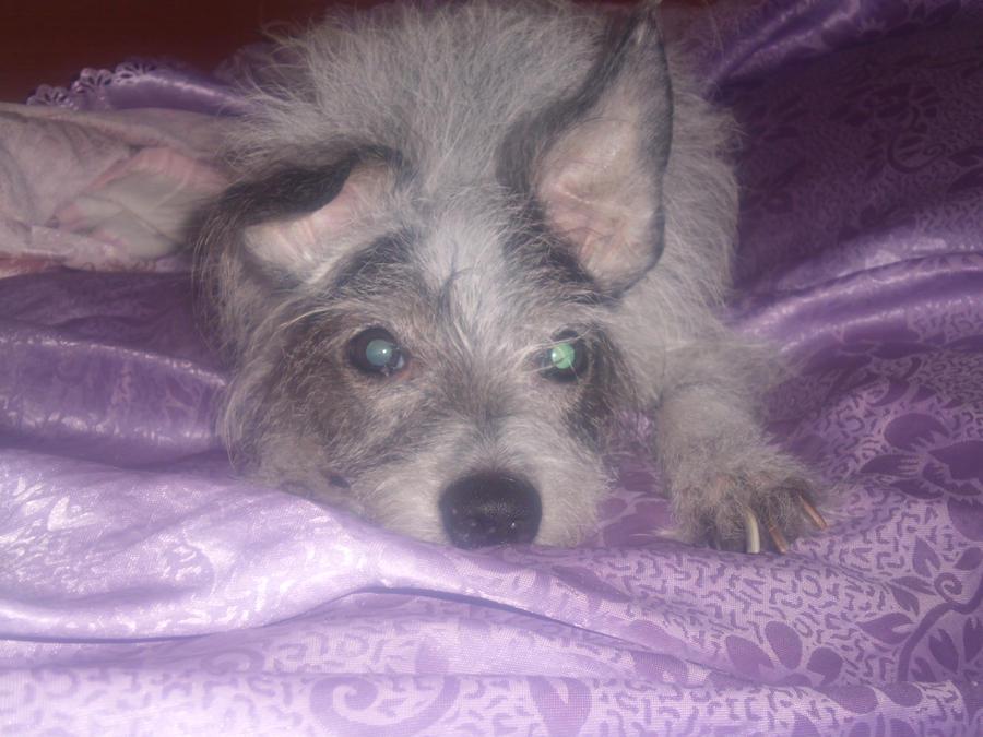 .: My Dog :. by missskeletrina95