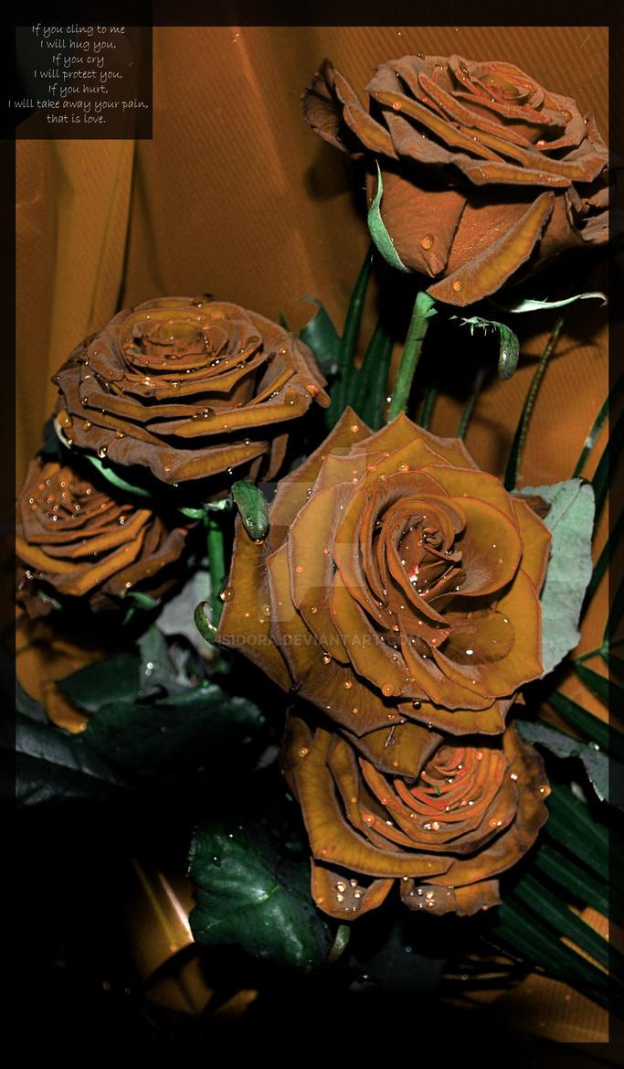 rose hue by Isidora
