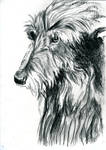 Charcoal Wolfhound