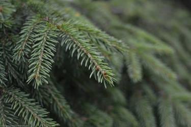 Spruce by TWKofSWE