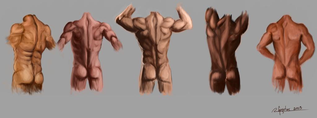 Study: Anatomy of the Back by ohayo-otaku on DeviantArt