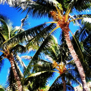 more palm trees