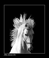 white by EquusAhu