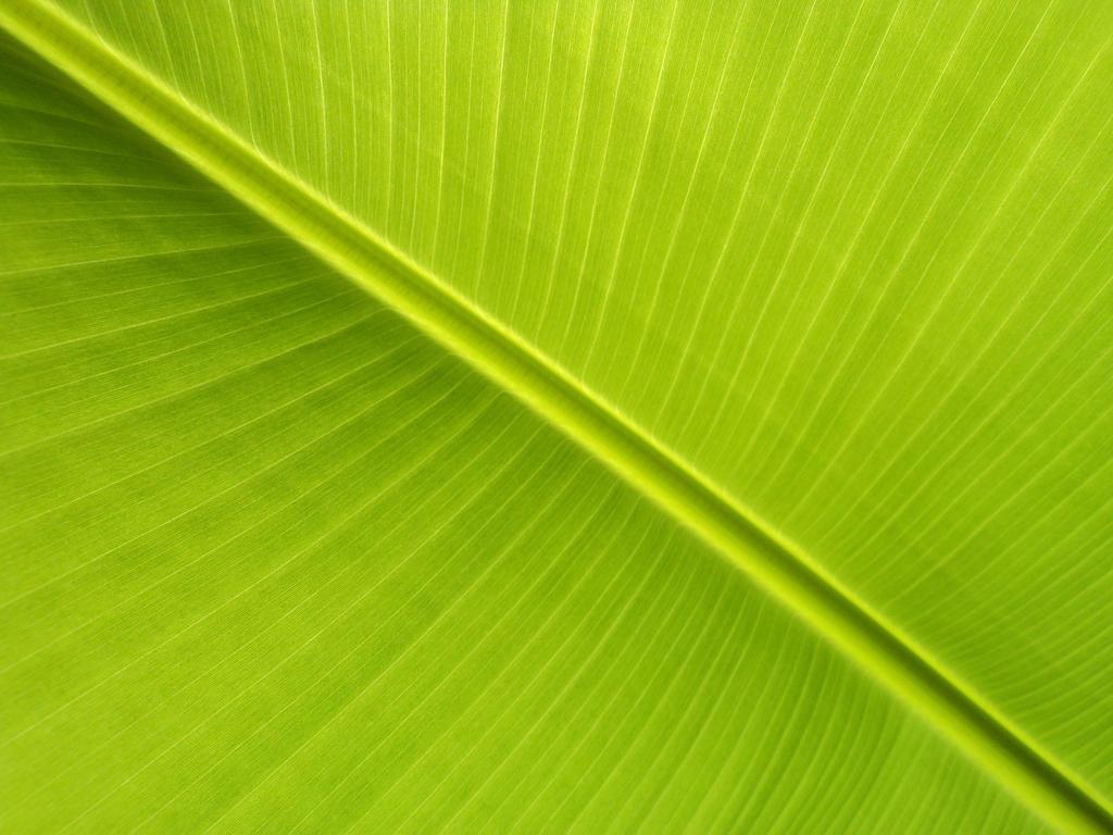 banana leaf ii by lukasb86 on deviantart