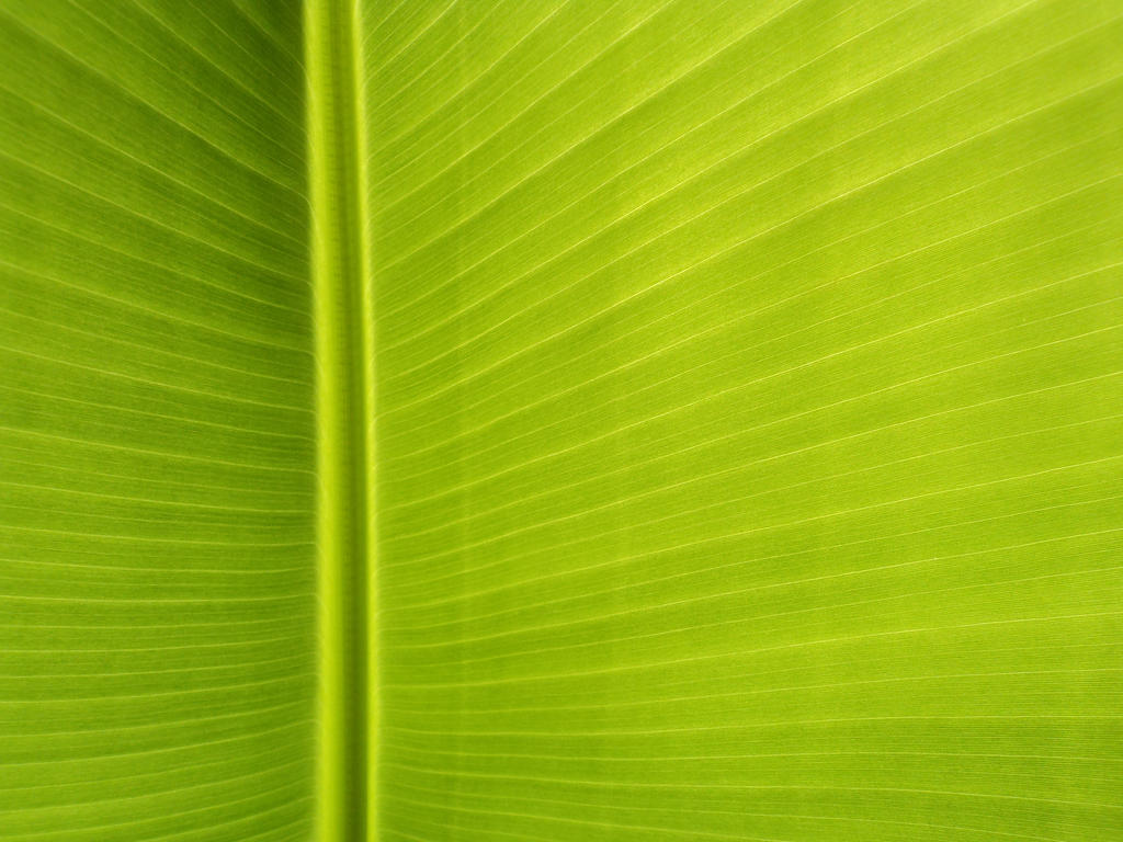 Banana Leaf Wallpaper Banana leaf iii by lukasb86Banana Leaf Wallpaper Bathroom