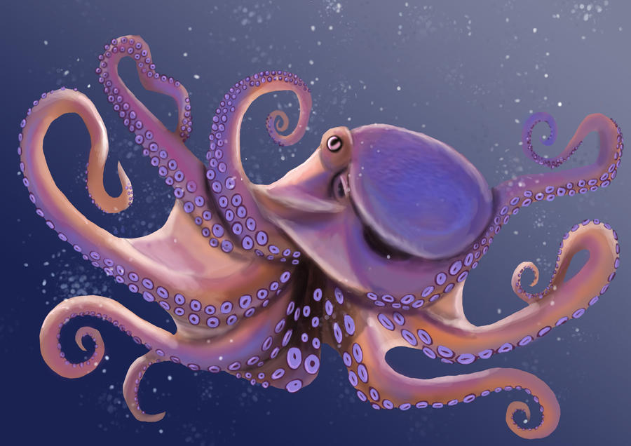 real octopus wallpaper - photo #21