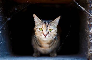 Cat In The Wall by Milandeentjestoe
