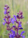 Dear, make me violet by alexandra251294