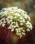 Flower your world